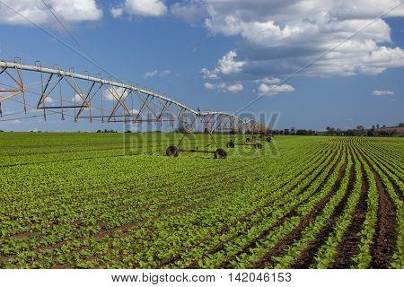 Industrial Irrigation Equipment On Farm Field Under A Blue Sky In Brazil.