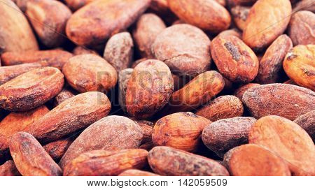raw fresh whole cacao beans, food background