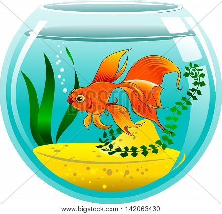 golden fish in a small aquarium vector and illustration