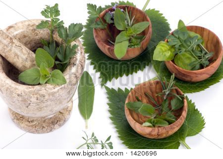 Herbs 013
