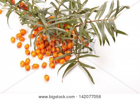 Branch of sea-buckthorn berries and handful of berries on a white background.