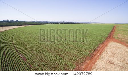 Aerial View Of The Potatoes Plantation In Sao Paulo State - Brazil