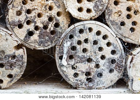 Wooden trunks with insects hotel and spiderwebs