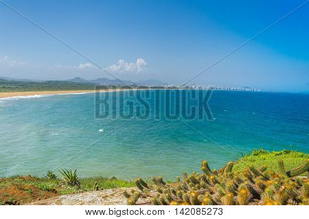 Field of wild plants on sunny day with cactus and beach in background