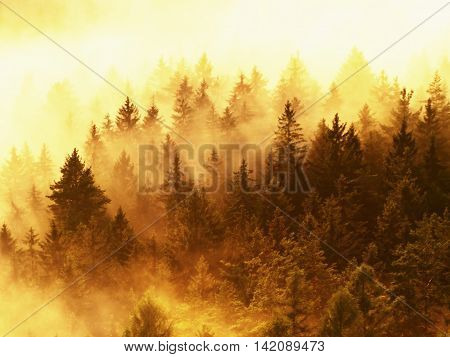 Stripped Colorful Mist. Summer Forest After Heavy Rainy Night