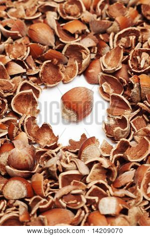 whole hazelnut surrounded by shells