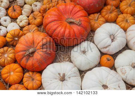 Pumpkins, autumnal harvest, mini pumpkin autumn background