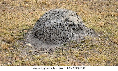 Termite nest in South Africa National Park