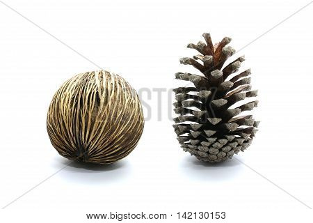 Suicide tree seed Pong pong seed or OthalangaCerbera oddloam's seed together with cone pine-tree isolated on white background