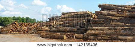 sawmill yard  logs woodpiles stacks forest industry