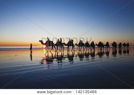 Camels walking on Cable Beach, Broome, Western Australia during sunset