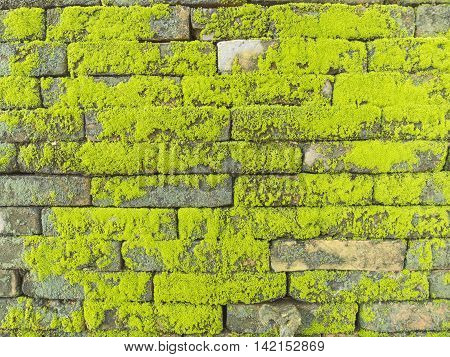 Texture of old concrete brick wall background covered with green moss parasite plant Brick wall background texture with moss