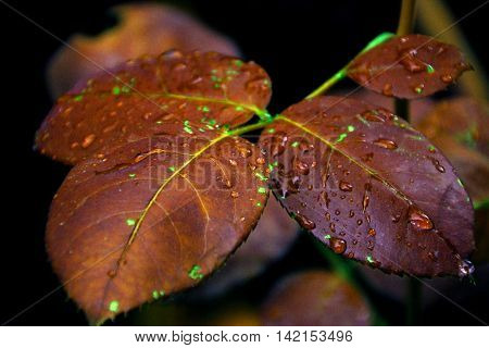 a close up of autumn colored leaves