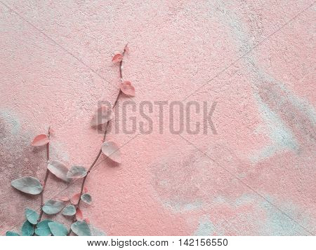 Colorful Ficus Pumila (MORACEAE) vines climbing on pink cement wall with copy space Pastel Filter