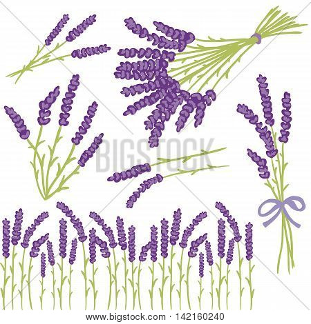 Vector floral set of colored lavender design elements. Spring or summer lavender hand drawn illustrations.