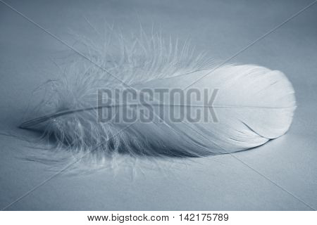 White feather,Closeup.