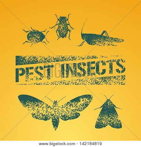 Set of pest insects vector illustration. Agriculture and garden pest bugs fly colorado beetle locust moths as silhouettes and icons. Pest insects stamp symbol