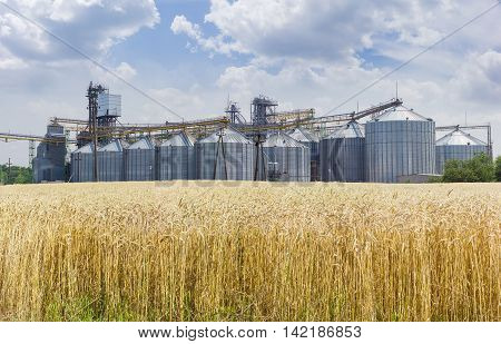 Grain storage system with corrugated steel storage bins and grain distribution system on the background of sky with clouds and field of ripe wheat in the foreground