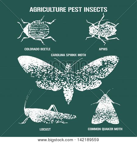 Set of pest insects vector illustration with signs. Agriculture and garden pest bugs fly colorado beetle locust moths as silhouettes and icons. English names for each insect