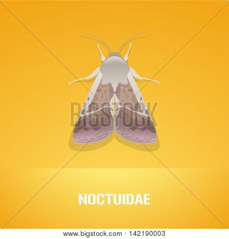 Realistic vector illustration of insect Noctuidae common quaker moth. Pest insect of agriculture farmland. Design element with Latin sign for insecticide poster brochure article
