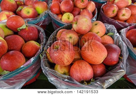 Bushels Filled with Fresh Picked Apples at Farm Market