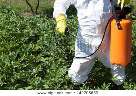 Man spraying toxic pesticides or insecticides in vegetable garden. Non-organic vegetables.