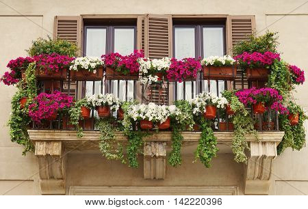 Beautiful Balcony Decorated with Flower Pots at Piazza Navona in Rome