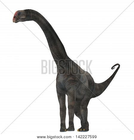 Brontomerus Dinosaur on White 3D Illustration - Brontomerus was a herbivorous sauropod dinosaur that lived in the Cretaceous Period of Utah USA.