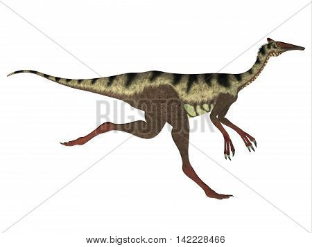 Pelecanimimus Side Profile 3D Illustration - Pelecanimimus was a carnivorous theropod dinosaur that lived in the Cretaceous Period of Spain.