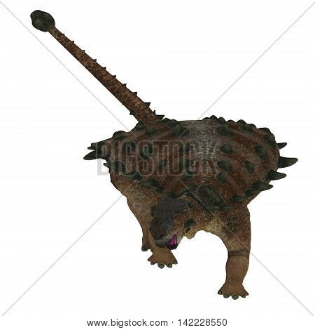 Pinacosaurus Dinosaur on White 3D Illustration - Pinacosaurus was a herbivorous ankylosaur that lived in the Cretaceous Period of Mongolia and China.