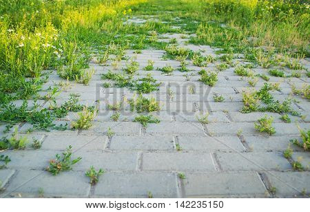 Grass growing through the road. Selective focus.