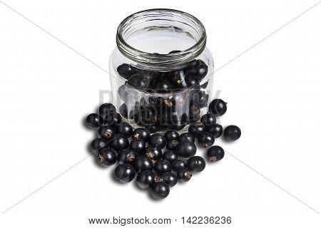 Blackenning Currant Ripe Berries
