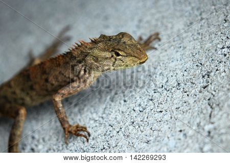 Image of chameleon on the cement floor