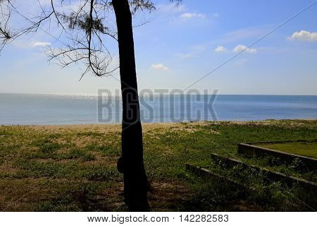 silhouette of a backlit pine tree trunk with old, overgrown steps on the right, flat blue sea in the background, morning glory vines covering the sand, Songkhla, Thailand