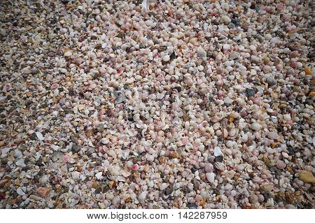 a lot of broken small corals scrap of sea shell on the sand at prachuapkhirikhan thailand