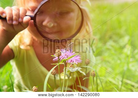 Learning concept- little girl examining batterfies on flower using magnifying glass