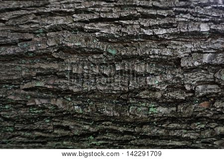 Dark Bark Tree Texture
