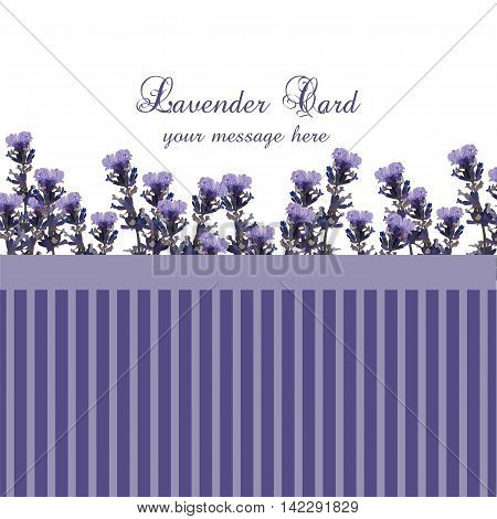 Lavender Card with Vintage border. Vector Gentle blossom floral bouquet. Vintage Label with lavender beautiful fragrance