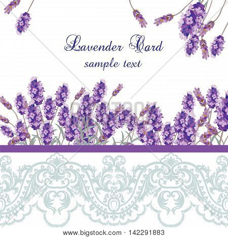 Lavender Card with lace border. Vector Gentle blossom floral bouquet. Vintage Label with lavender beautiful fragrance