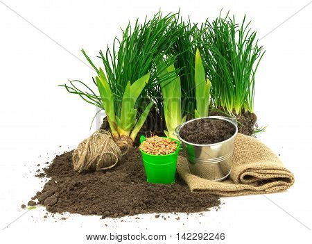 Gardening concept with grass ground seeds metal bucket sack sacking thread isolated on white background