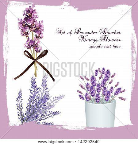 Lavender set bouquet collection Vector. Gentle blossom floral bouquet. Vintage Label with lavender beautiful fragrance