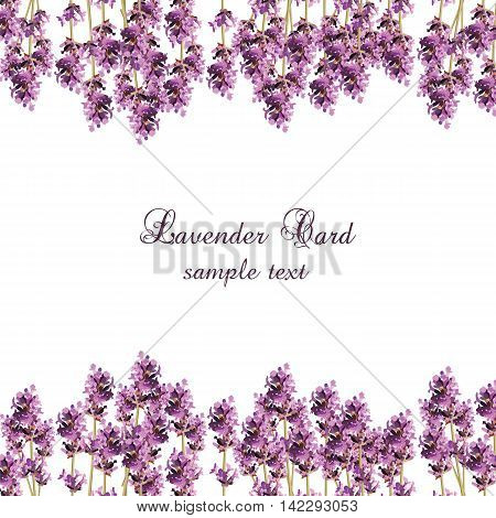Lavender Card with flowers in watercolor paint style Vector . Gentle blossom floral bouquet. Vintage Label with lavender beautiful fragrance