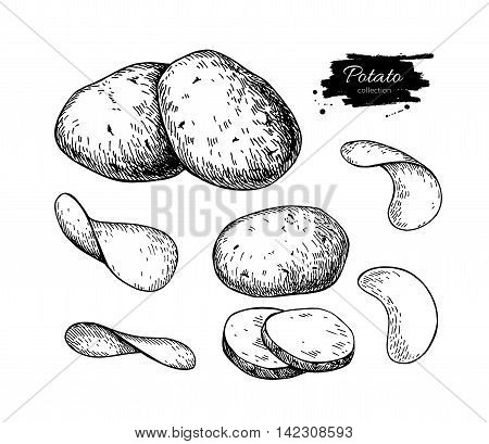 Potato drawing set. Vector Isolated potatoes heap sliced pieces and chips. Vegetable engraved style illustration. Detailed vegetarian food sketch. Farm market product. Great for label banner poster