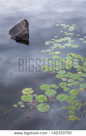 Rock And Lily Pads On A Canadian Lake