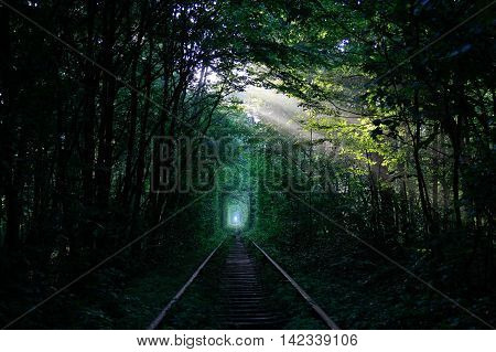 Sunny ray of light in the green train tunnel in the forest created by thickets of shrubs and trees.