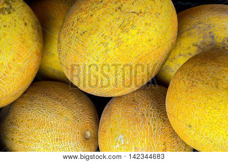 Melons in the market a lot of melons. Large yellow fruit. Melons background.