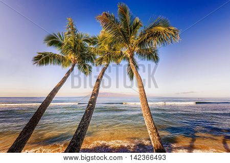 Palm Trees And The Pacific Ocean In Hawaii