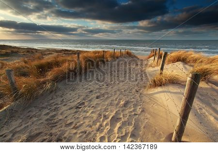 sand path to North sea beach in sunshine North Holland Netherlands