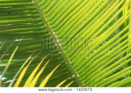 Light Filtering Through Palm Trees