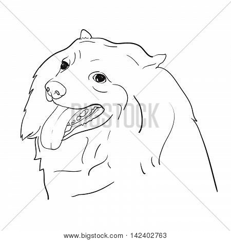 Drawing of cute spritz dog on white backgroundvector illustration